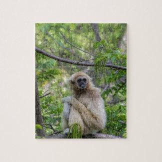 Blonde Gibbon Monkey - Hylobates lar Puzzle