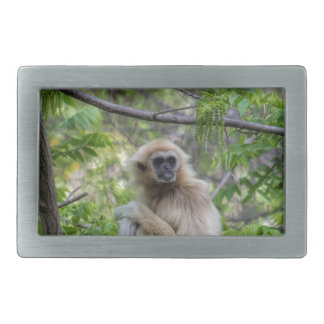 Blonde Gibbon Monkey - Hylobates lar Rectangular Belt Buckle