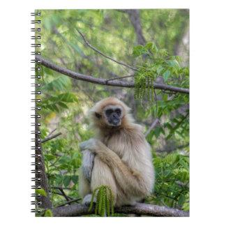 Blonde Gibbon Monkey - Hylobates lar Spiral Notebook