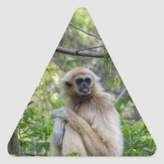 Blonde Gibbon Monkey - Hylobates lar Triangle Sticker