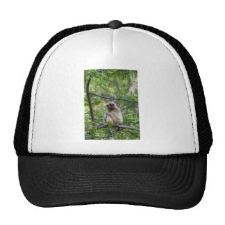 Blonde Gibbon Monkey - Hylobates lar Trucker Hat