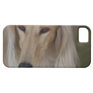 Blonde Saluki Dog iPhone SE/5/5s Case