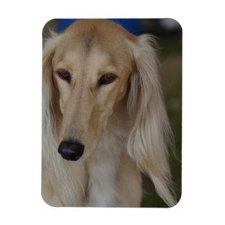 Blonde Saluki Dog Rectangular Photo Magnet