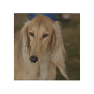 Blonde Saluki Dog Wood Print