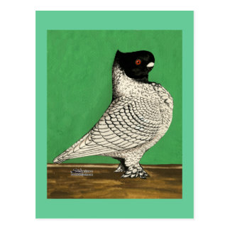Blondinette Frill Pigeon Post Card
