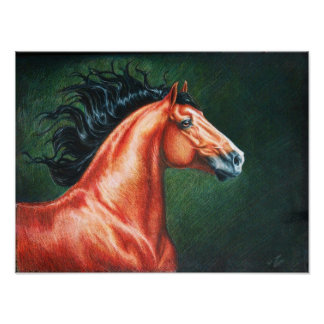 Blood Bay Lusitano Stallion Poster