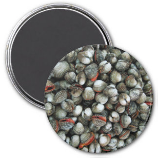 Blood Cockle Shells Magnet