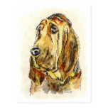 Blood Hound Dogs Postcards