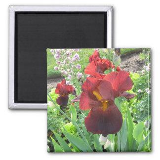 Blood Iris Magnet
