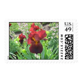 Blood Iris Stamp