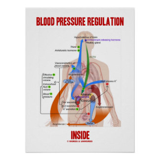 Blood Pressure Regulation Inside Physiology Poster
