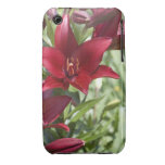 Blood Red Daylily iPhone 3 Cover