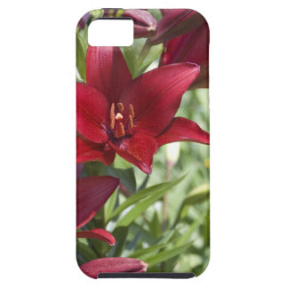 Blood Red Daylily iPhone SE/5/5s Case