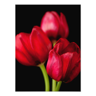 Blood Red Tulips on Black Background Customized Photographic Print