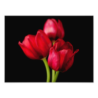 Blood Red Tulips on Black Background Customized Photograph