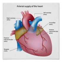 Blood supply to the heart Poster