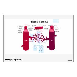 Blood Vessels Arteries Capillaries Veins Diagram Wall Sticker