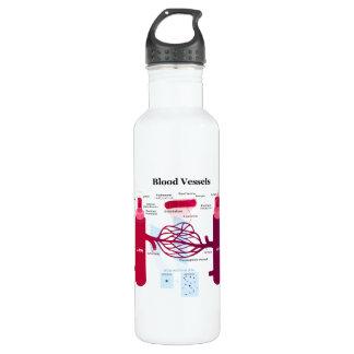 Blood Vessels Arteries Capillaries Veins Diagram Water Bottle