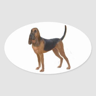 Bloodhound (A) - standing Oval Sticker
