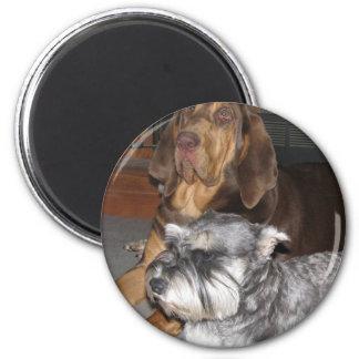 Bloodhound and Miniature Schnauzer Magnet