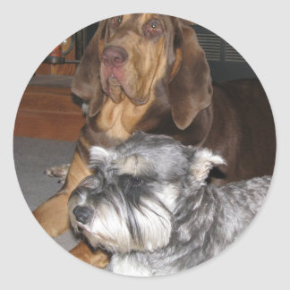 Bloodhound and Miniature Schnauzer Stickers