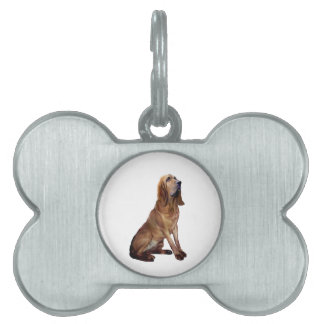 Bloodhound (B) - Sitting Pet Name Tags