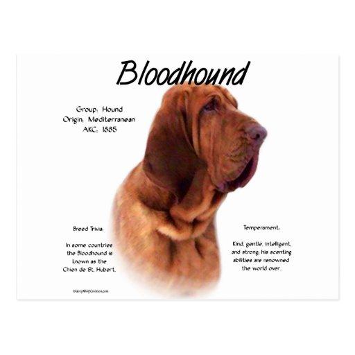 Bloodhound History Design Postcards