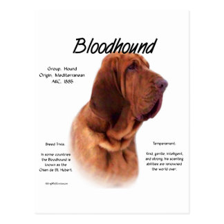 Bloodhound History Design Post Cards