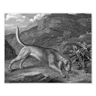 Bloodhound in Black and White Photograph