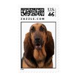 Bloodhound Postage