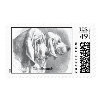 Bloodhound Postage Stamps