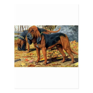 Bloodhound Postcard