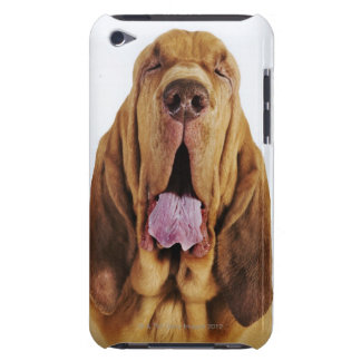 Bloodhound (St. Hubert Hound) with closed eyes, iPod Touch Cases
