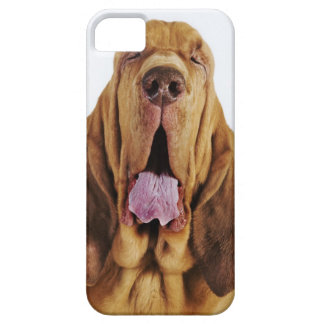 Bloodhound (St. Hubert Hound) with closed eyes, iPhone SE/5/5s Case
