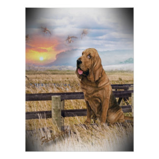 Bloodhound Sunset Poster
