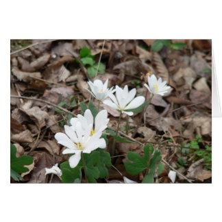 Bloodroot Bouquet Stationery Note Card