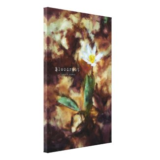 Bloodroot Spring Wild Flower Painting Canvas wrappedcanvas