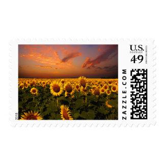 Bloody Skies Postage Stamps