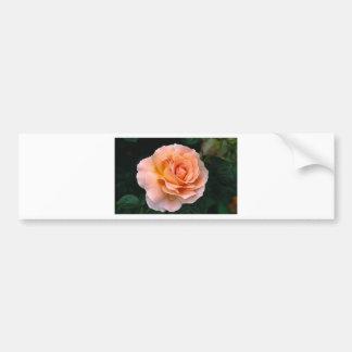 bloom car bumper sticker