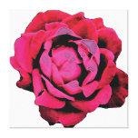 Bloom Canvas Prints