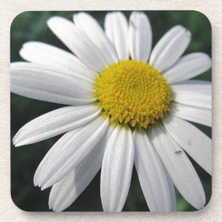 Bloom center white daisy coaster