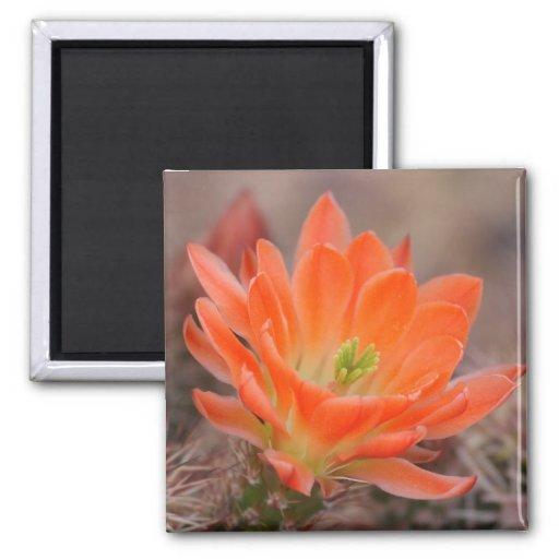 bloom in orange magnet