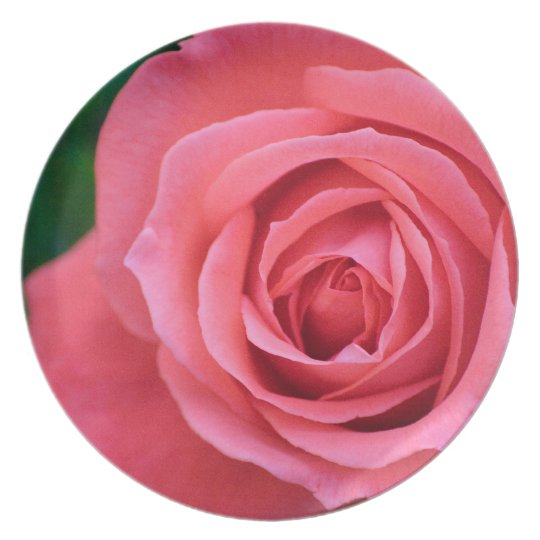 Bloom In Pink Dinner Plate