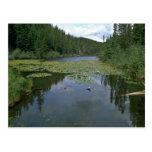 Bloom In Water Postcards