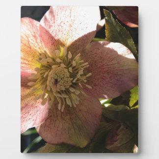 Bloom Photo Plaques