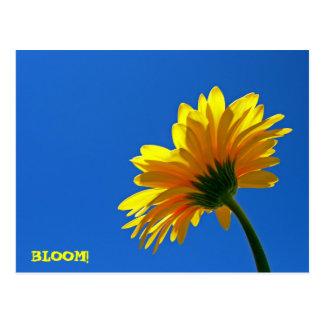 BLOOM! Postcard