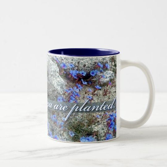 Bloom Where You Are Planted, Bluets Two-Tone Coffee Mug
