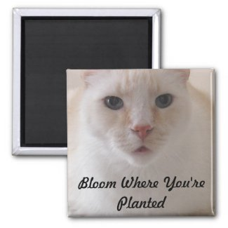 Bloom where you are planted image magnet
