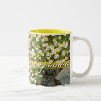 Bloom Where You Are Planted, White aster on yellow Two-Tone Coffee Mug