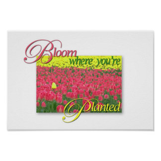 Bloom Where You re Planted Print